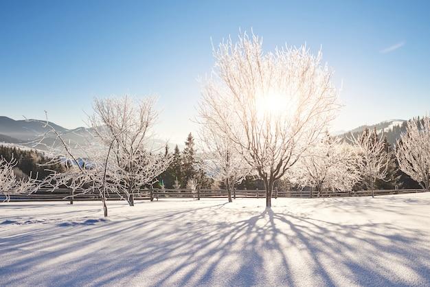 겨울에 신비한 겨울 풍경 장엄한 산입니다. 마법의 겨울 눈 덮힌 나무. 카 르 파티 아. 우크라이나 무료 사진