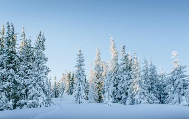 Таинственный зимний пейзаж величественных гор зимой. волшебная зима заснеженного дерева. Бесплатные Фотографии