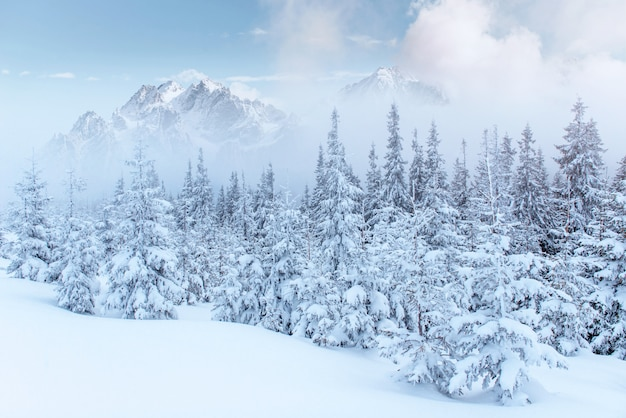 Mysterious winter landscape majestic mountains in the winter. Free Photo