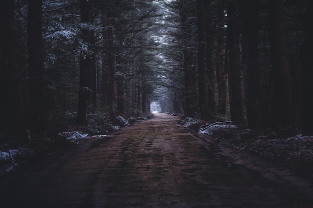 Una stretta strada fangosa in una foresta oscura Foto Gratuite