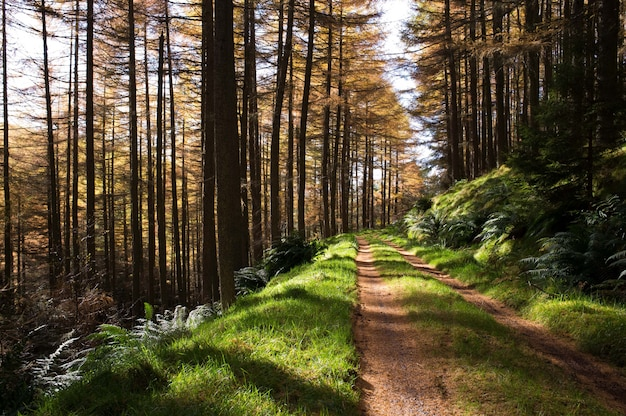 Narrow muddy road in a forest with tall trees Free Photo