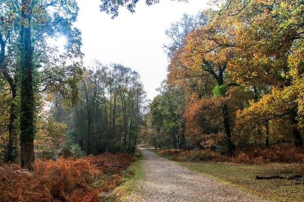 Узкая дорожка возле множества деревьев в нью-форест недалеко от брокенхерста, великобритания Бесплатные Фотографии