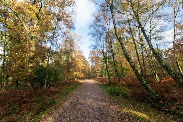 Узкая тропа возле большого количества деревьев в нью-форест возле брокенхерст, великобритания Бесплатные Фотографии