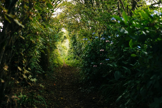 Narrow pathway with beautiful greenery in a forest Free Photo