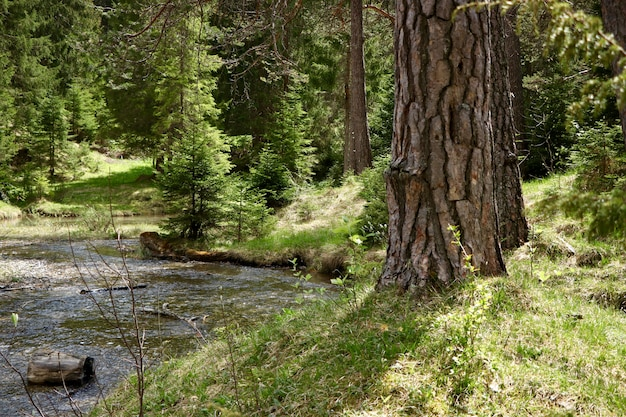 Узкая река в лесу в окружении красивых зеленых деревьев Бесплатные Фотографии