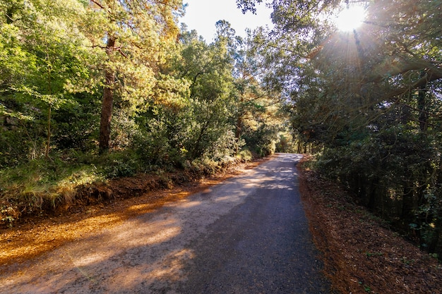 Narrow road running through the forest Premium Photo
