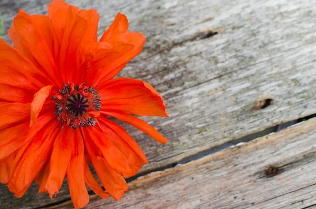 国民のアメリカの祝日記念日コンセプト。赤いケシの花と木の空間。ケシの花の記念スペース Premium写真