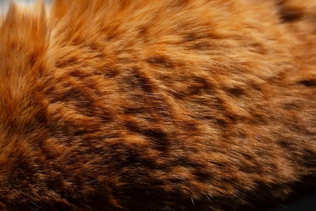 オレンジ色の猫の毛皮の自然な背景。 Premium写真