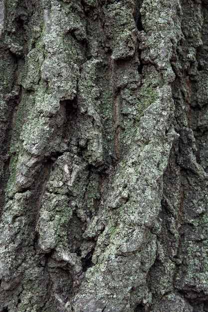Natural background of old tree bark. the texture of the tree bark is similar to the texture of rocks. wooden background to fill web page or graphic design Premium Photo