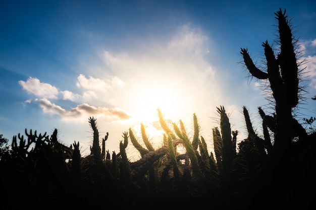 Natural background with cactus silhouette against the blue sky and intense sun. Premium Photo