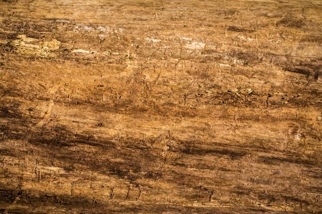 Natural beautiful old wood texture, closeup, Free Photo
