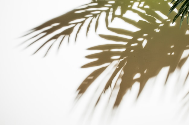 Natural black leaves shadow on background Free Photo