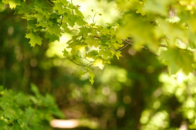 Natural blurred background of the path in the summer forest Premium Photo