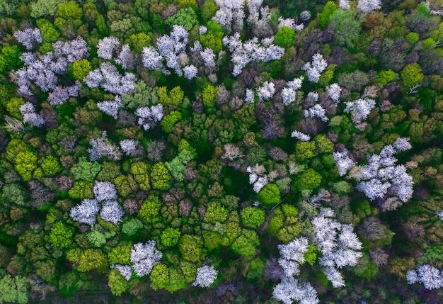 自然な暗い背景やパターン。果樹が咲く春の森。上面図。 Premium写真