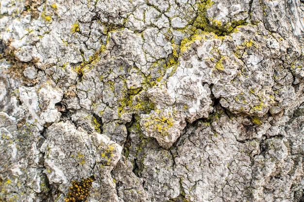 苔と地衣類の自然な灰色の古い木の樹皮 Premium写真