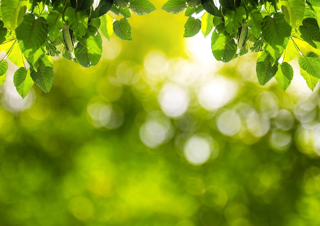 Natural Green Blurred Bokeh With Green Leaf Abstract