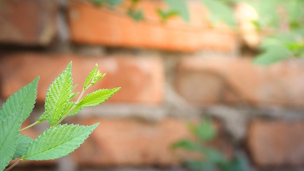 Natural green leaves with blur bokeh spring or summer background, ecology concept Premium Photo