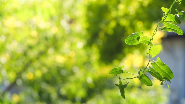 Natural green leaves with blur bokeh spring or summer background Premium Photo