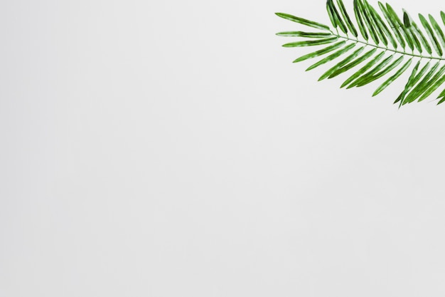 Natural green palm leaves on the corner of the white background ...