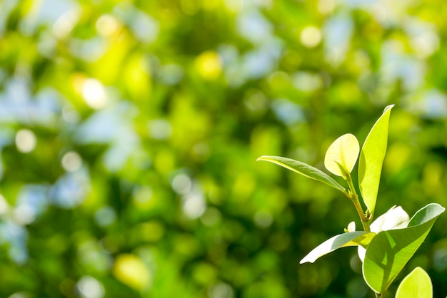 Natural Green Plants Background Or Wallpaper Nature View Of