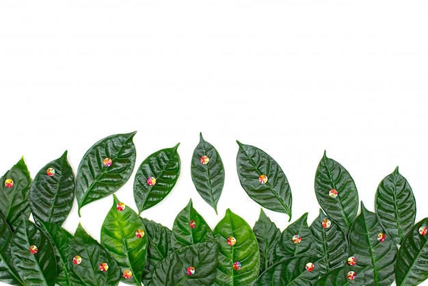 Natural holiday background with green leaves on a white background. Premium Photo