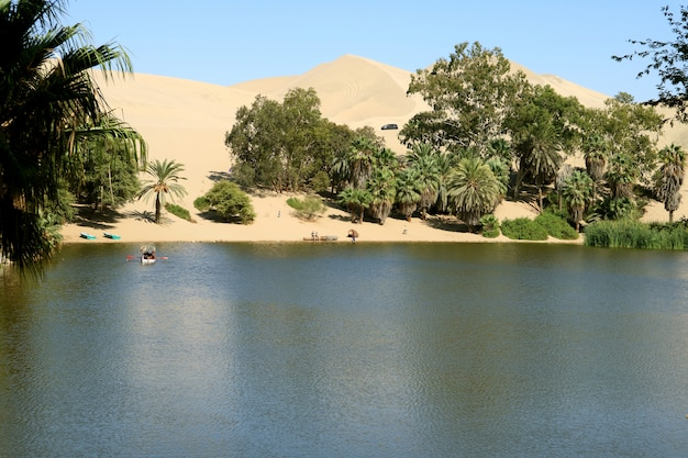 Natural lagoon at huacachina oasis town surrounded by many palm trees and amazing sand dune Premium Photo