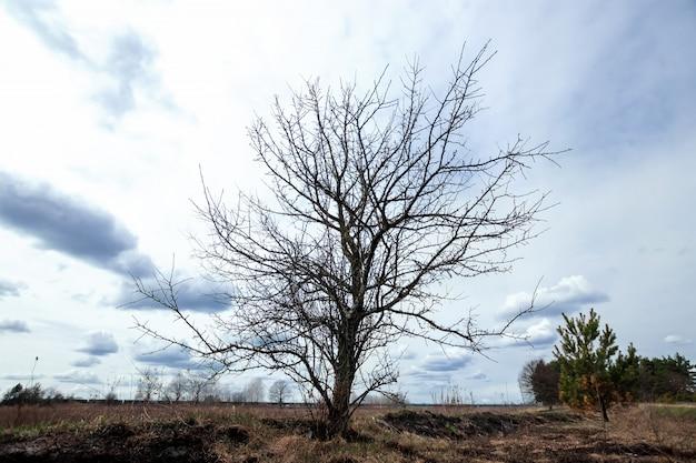 Natural landscape dry tree gray clouds, drought Premium Photo