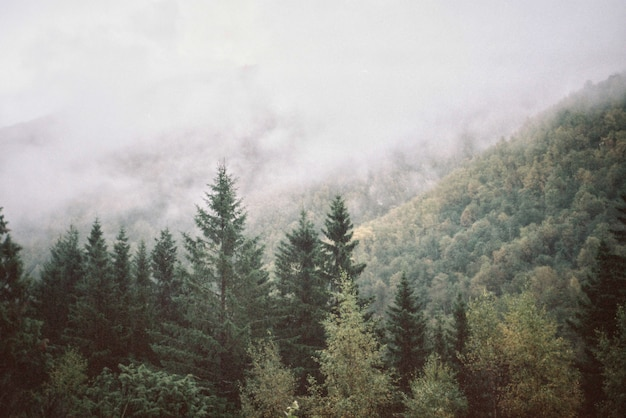 Natural landscape of mountains and forest Free Photo