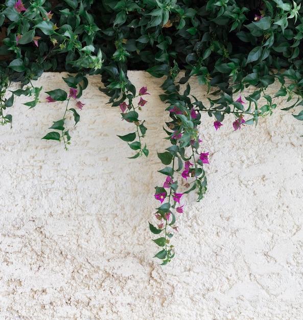 Природные листья и копия космического фона стены Бесплатные Фотографии