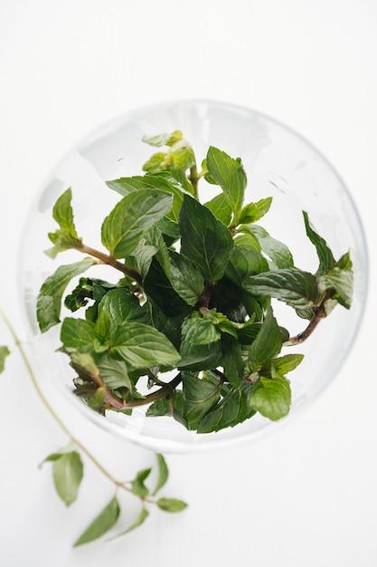 Natural mint leafs in the glass jar. Premium Photo