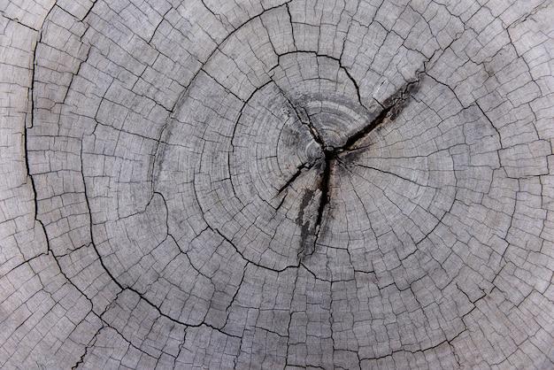 Естественная старая текстура древесины пня Premium Фотографии