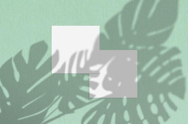 몬스 테라 잎이 자연 오버레이 조명 그림자 프리미엄 사진