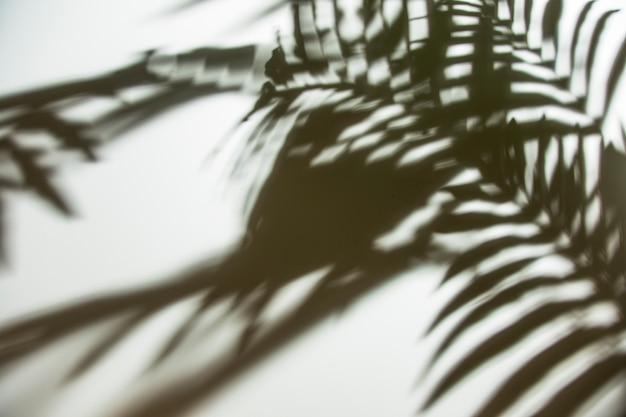 Natural palm leaves shadow on white backdrop Free Photo