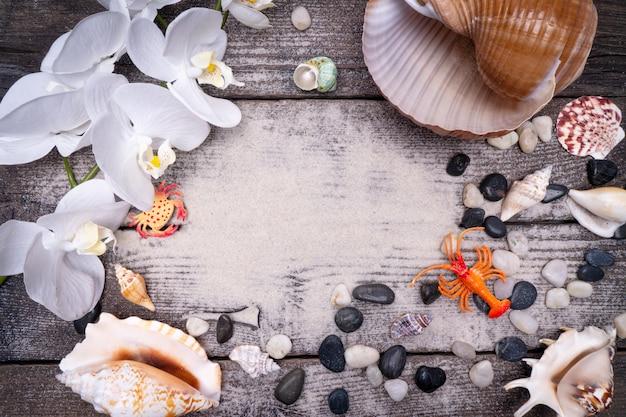 Natural sea shells Premium Photo