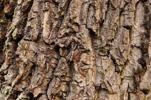 Natural, texture of red oak tree bark. Premium Photo