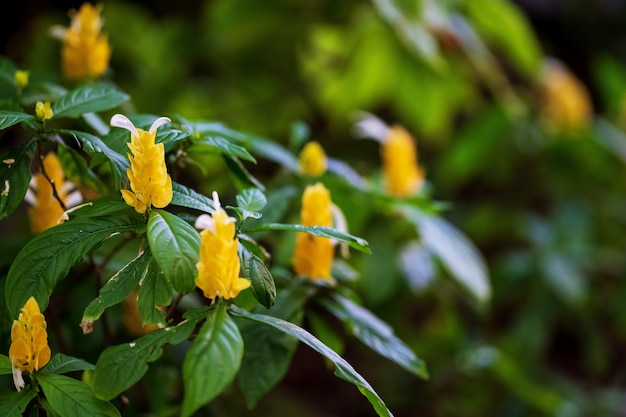 Natural yellow flower in the garden Premium Photo