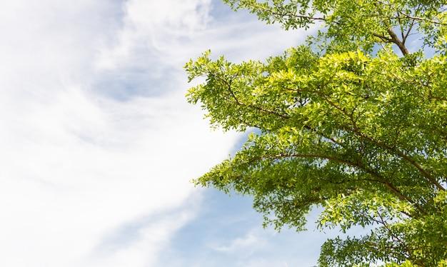 Nature green leaves Premium Photo