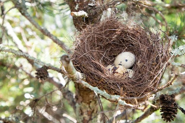 Nature image of egg in nest tree Premium Photo