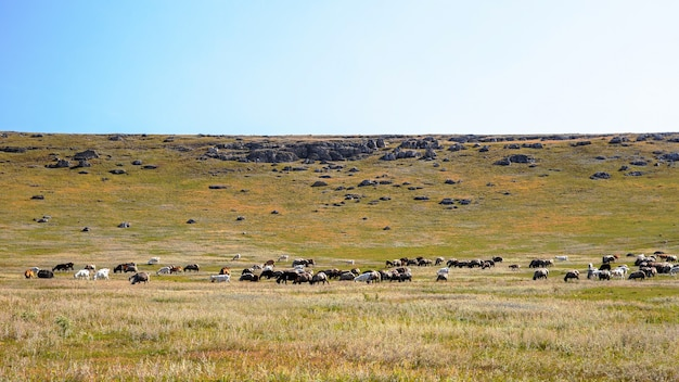 Nature of moldova, plain with sparse vegetation, multiple rocks and grazing goats Free Photo