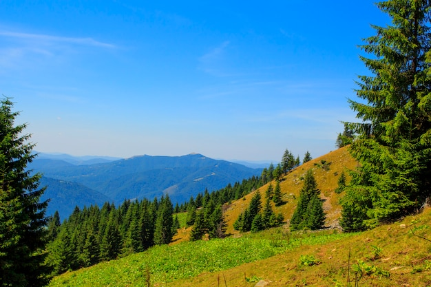 Nature in the mountains, beautiful scenery, beautiful mountain landscapes in summer, carpathians. Premium Photo