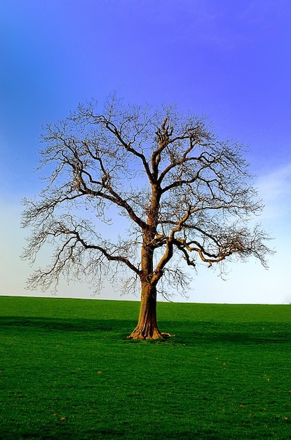 Nature north season background tree yorkshire photo free download - Tree images free download ...