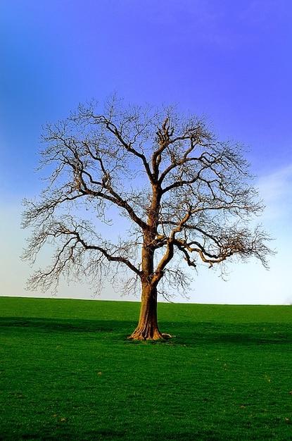 Nature north season background tree yorkshire Photo | Free ...