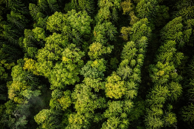 Nature photography from the air Free Photo
