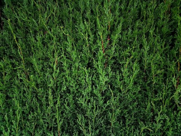 Природа сосновые ветви фон Бесплатные Фотографии