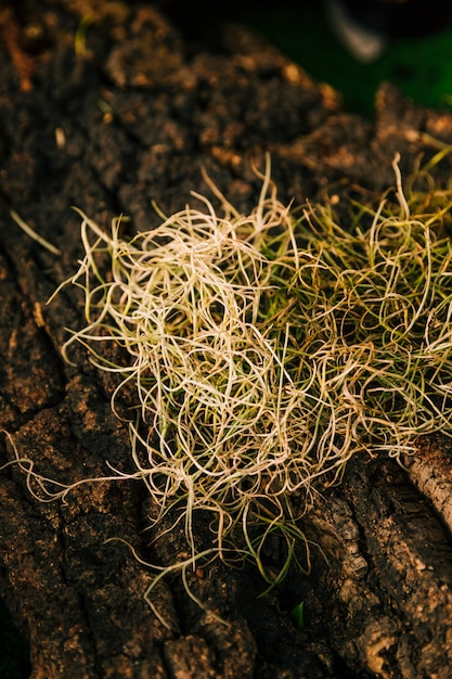 Nature roots on the rock surface Free Photo