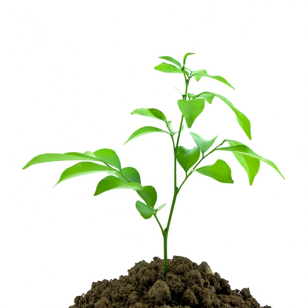nature sprout dirt young seedling Free Photo