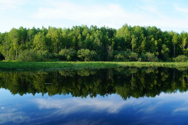 Nature in summer. green trees are reflected in the water. Premium Photo