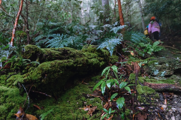 Nature trail with mosses cover the decomposed tree trunk in rainforest Premium Photo