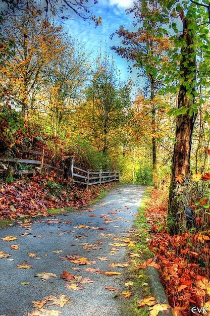 nature autumn landscape trail vibrant colors