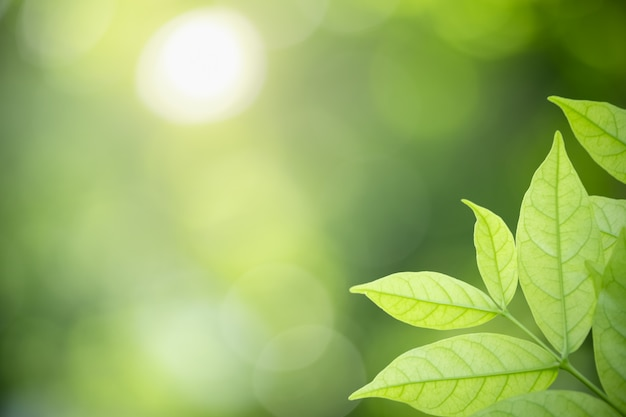 Nature view green leaf on blurred background under sunlight Premium Photo